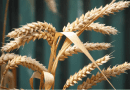 Are we entering the great end-time harvest? – ONE FOR ISRAEL